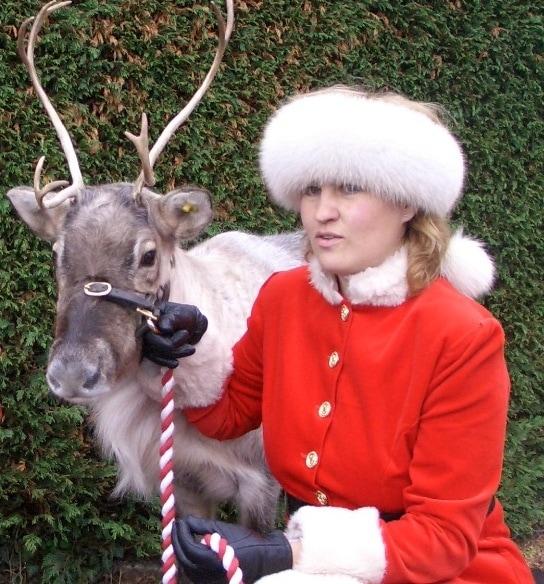 reindeer-cropped